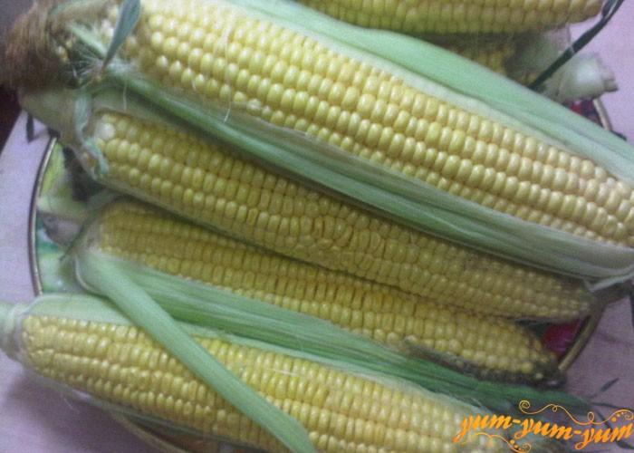 Выбираем кукурузу с крупными зернами