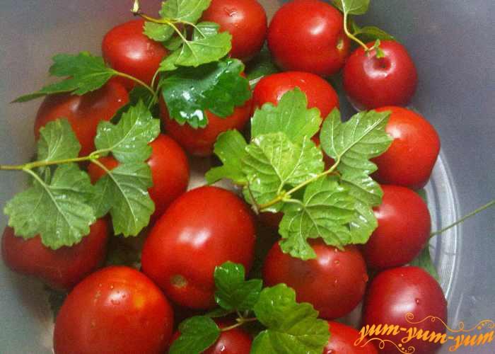 Сверху еще помидоров выкладываем еще слой листьев