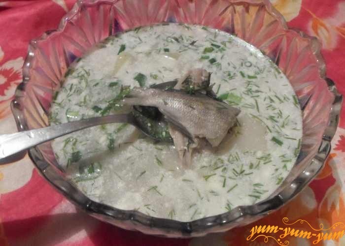 Уха из морских окуней рецепт пошаговый с фото