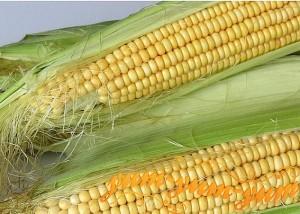 Как готовить кукурузу в микроволновке